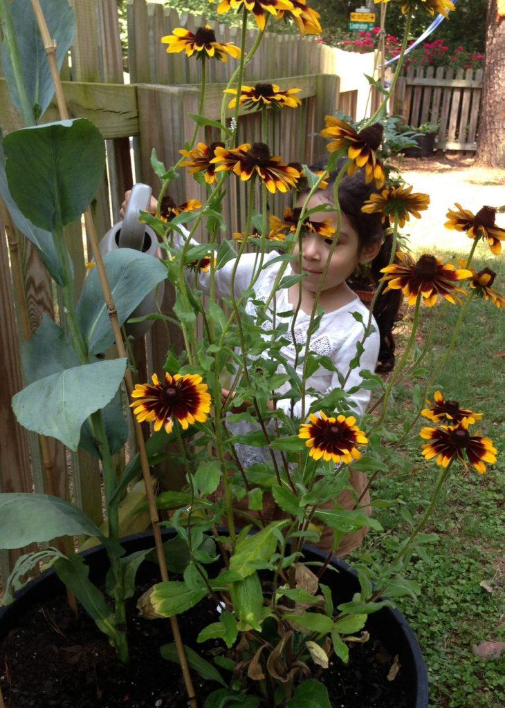 summer+julia+flowers